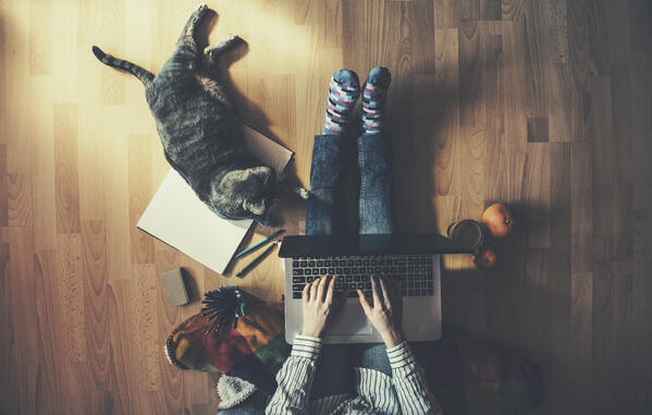 work from home with cat